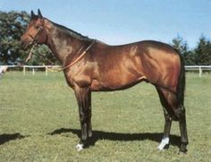 Thatching(1975)(Colt)Thatch- Abella By Abernant. 4x4 To Hyperion, 4x5 To Dalmary, 5x5 To Nearco. 12 Starts 4 Wins 2 Seconds. $109,573. Won Cork & Orrery S(Ire-3), July Cup(Eng-1), Duke Of York S(Eng-3). Excellent Sire From The Forli & His Grandsire Hyperion Sire Line With Several Different Lines From Nearco & Blandford Mixed In , Mostly On The Dam Side.: