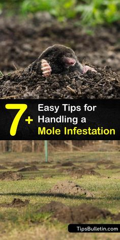 Rejoice in your hard work and dedication with these tips to stop a mole infestation. Homeowners use this advice to learn how to spot molehills and tunneling while eliminating the food source, setting mole traps, and spraying castor oil repellents to keep pests at bay. #stop #mole #infestation Mole Repellent, Earthworms, Natural Health Tips, Beneficial Insects, Hard Work And Dedication, Garden Pests, Garden Care, Water Garden