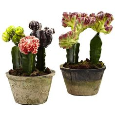 Nearly Natural Colorful Cactus Silk Plant - Set of 2 - 4843-S2