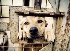 PLEASE HELP!   STOP #YulinDogMeatFestival   STOP EATING #DOGS & #Cats   PLEASE SIGN & RT http://chn.ge/1sSlz0N