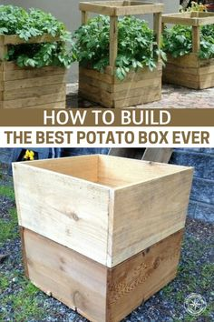 How To Build The Best Potato Box Ever - - Growing potatoes in a box may seem weird and lot of effort but actually can double and even quadruple your potato yield. Growing potatoes in a box is just like planting in a raised bed. Raised Vegetable Gardens, Veg Garden, Garden Boxes, Edible Garden, Raised Garden Beds, Raised Beds, Vegetable Gardening, Diy Garden Box, Garden Planters