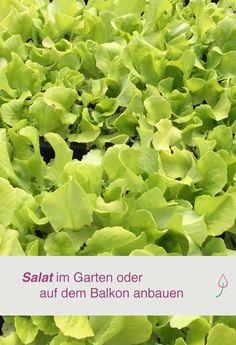 Salat auf dem Balkon oder im Garten anbauen - so leicht geht es!