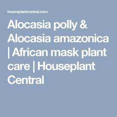 Alocasia polly & Alocasia amazonica | African mask plant care | Houseplant Central