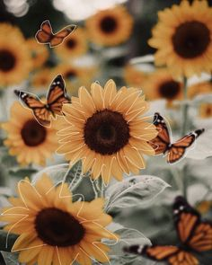 95 Super Perfect Sunflower Wallpaper for Your iPhone Yellow Aesthetic Pastel, Rainbow Aesthetic, Orange Aesthetic, Aesthetic Pastel Wallpaper, Aesthetic Colors, Flower Aesthetic, Aesthetic Collage, Aesthetic Backgrounds, Aesthetic Wallpapers