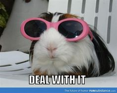 Reminds me of one of my piggies, Miss Maybelline. She is a total Diva. :p