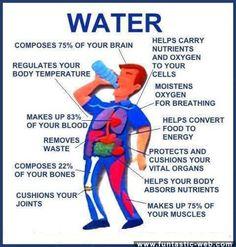 Water in Human Body