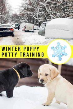 Labrador Puppy Training, Puppy Potty Training Tips, Dog Training, Puppy Schedule, New Puppy Checklist, Small Puppies, Lab Puppies, Puppy Pads, Dog Potty