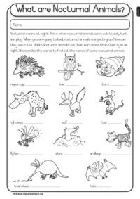 nocturnal animals list..cute on dark paper! | Classroom Anchor ...