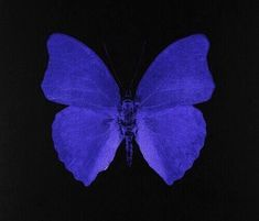Purple Aesthetic, Aesthetic Grunge, Aesthetic Photo, Aesthetic Art, Aesthetic Pictures, Photo Wall Collage, Picture Wall, Picture Collages, Santa Lucia