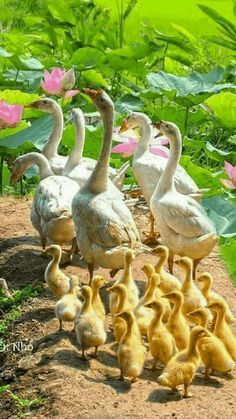 Que gran familia