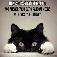 Yes, Yes.....only cat owners understand