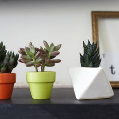 """Haworthia Haworthias are succulents but require less light than most, making them great for a less-than-sunny living situation. """"Buy one of these in bloom if you can find one. It's a beautiful sight,"""" Monji says. She recommends placing it in a room with light but away from the window and watering it sparingly one time per week. They grow slowly but can reach about six inches in diameter after a few years."""
