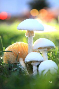 Mushrooms by Delia gutierrez, via 500px