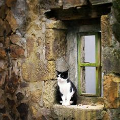 English stone cottage with a green window and an adorable cat on the windowsill