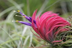 Tillandsia (air plants).