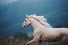 Melancholy Hill – Equine by Wengdahl All The Pretty Horses, Beautiful Horses, Animals Beautiful, Horse Girl Photography, Equine Photography, Photography Flowers, Cute Horses, Horse Love, Horse Photos