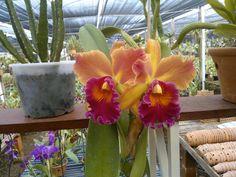 cultivando Orquídeas e idéias: TIPOS DE SUBSTRATO- usando a criatividade