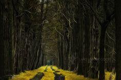 Path of Rapunzel by Lars van de Goor