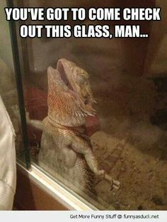 Glad to know Freya isn't the only beardie who does this. Lol