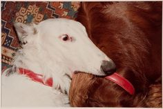 Ann E. Wulff  American, Untitled (white dog biting brown dog), 1980, Harvard Art Museums/Fogg Museum.