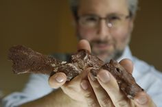 Fossils show transitional link from fins to limbs #fossils #paleontology