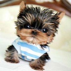 Looks Like a Stuffed Animal