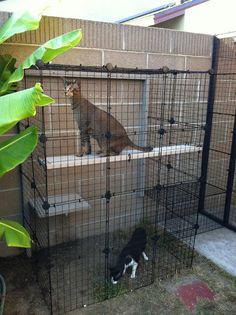 Catio- The cats would love this. Diy Cat Enclosure, Outdoor Cat Enclosure, Cat Cages, Cat Run, Outdoor Cats, Animal Projects, Cat Life, Crazy Cats, Kittens