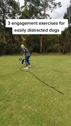 Cool Dog Tricks, Teach Dog Tricks, Puppy Care, Dog Care, Dog Enrichment, Puppy Supplies, Education Canine, Dog Training Tips, Dog Obedience Training