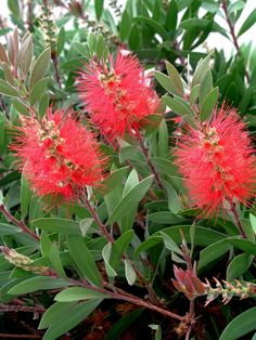 Spring flowers, move over. Theseastounding shrubs can get any gardener through the summer doldrums. Flowering Shrubs For Shade, Shade Loving Shrubs, Shade Shrubs, Shade Plants, Bog Plants, Evergreen Shrubs, Deciduous Trees, Trees And Shrubs, Tall Shrubs