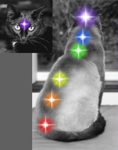 Balancing the Chakras on Animals
