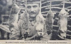 Trench rats, WWI. German.