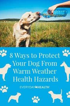 From scorching hot sidewalks to the risk of fleas and ticks, warmer weather brings an increased risk of health hazards for your dog. To help your dog beat the heat and stay happy and healthy, we asked veterinarians the top tips on summer dog safety. Hairless Dog, Summer Dog, Dog Safety, Pet Paws, Yoga For Weight Loss, Good Fats, Pet Health, Humane Society, Fleas