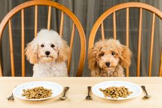 Do Cats & Dogs Get Tired Of Eating The Same Thing? | Cuteness