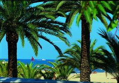 San Benedetto del Tronto. The Palms. (Marche)