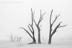 UPDATE - This image (as part of a series of four images) also now also won First Prize in the Travel Photographer Of The Year Awards.  - - -  Here's the second image from the series 'Beyond the veil of death' that won me Third Prize in this year's International Photography Awards - shot in Deadvlei, Namibia.  My images are most known for their clean compositions, the graphic use of shapes and lines, and their clarity. Deadvlei is probably one of the most graphic locations in the world, with…