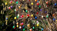 Eggs more color