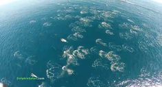 dolphins stampede in this video shot from above