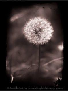 Jim Sabiston's Essential Light Photography