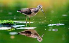 Bird Green Water Reflection