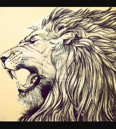 The Lion is my most favorite wild animal ever! <3