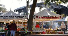 Dunedin FL farmer's market! Gulf Of Mexico, Future Travel, Main Street, Farmers Market, Day Trips, Palm, November, Bucket, Florida