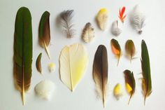 petalplum: Gathered Treasures / Forest Finds - feathers