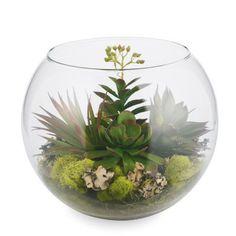 43 Best Glass Bowl Terrariums Images Succulents Cacti