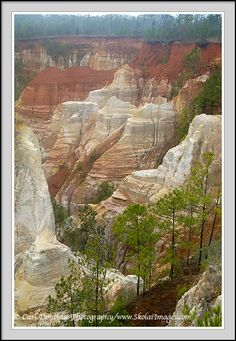 """Providence Canyon, Georgia.  GA has EVERYTHING!!  :) The State Park is a 1,003 acres located in Stewart County in southwest Georgia. The park contains Providence Canyon, which is sometimes called Georgia's """"Little Grand Canyon"""". It is considered to be one of the Seven Natural Wonders of Georgia."""