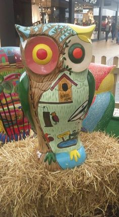 Big Hoot Owl in Sutton Coldfield 2015