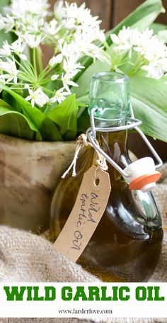 Super easy and tasty recipe for wild garlic oil, a forraging find that is perfect for salads and homemade mayo. Garlic Oil Recipe, Garlic Dip, Wild Garlic, Garlic Recipes, Raw Food Recipes, Curry Recipes, Salted Caramel Fudge, Salted Caramels, Tasty Recipe