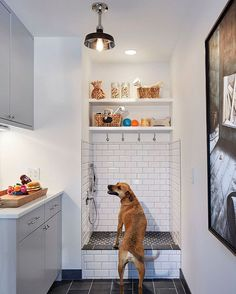 Dog wash in mudroom