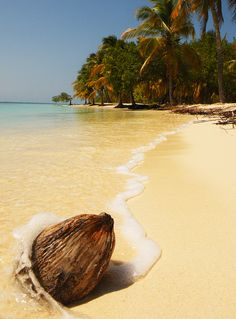 Coconut on the beach, Morrocoy, #Venezuela (by Goldfeesh).   One of my best friends....RICKY R has a house here!!!!!!