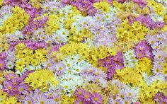 wallpapers free flower