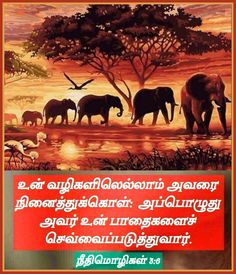Bible Words, Bible Quotes, Bible Verses, Jesus Wallpaper, Bible Verse Wallpaper, Tamil Bible, Morning Greeting, Study, Faith